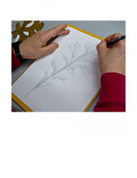Person drawing an oak leaf with Silverpoint