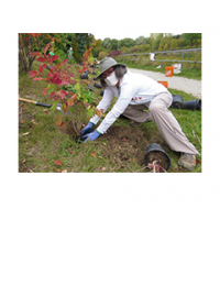 Woman planting a small tree