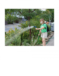 person watering garden with trees
