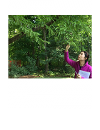 Woman reaching up to observe a tree branch