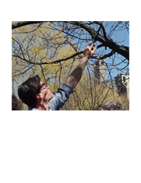 Man reaching up to examine a branch