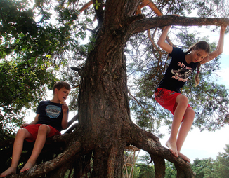 © 2015 Creative Commons Siblings climbing a tree