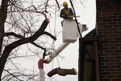 Tree Pruning for storm readiness