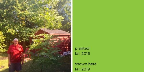 Colin next to Kentucky coffee tree, reads: planted fall 2016, shown here fall 2019