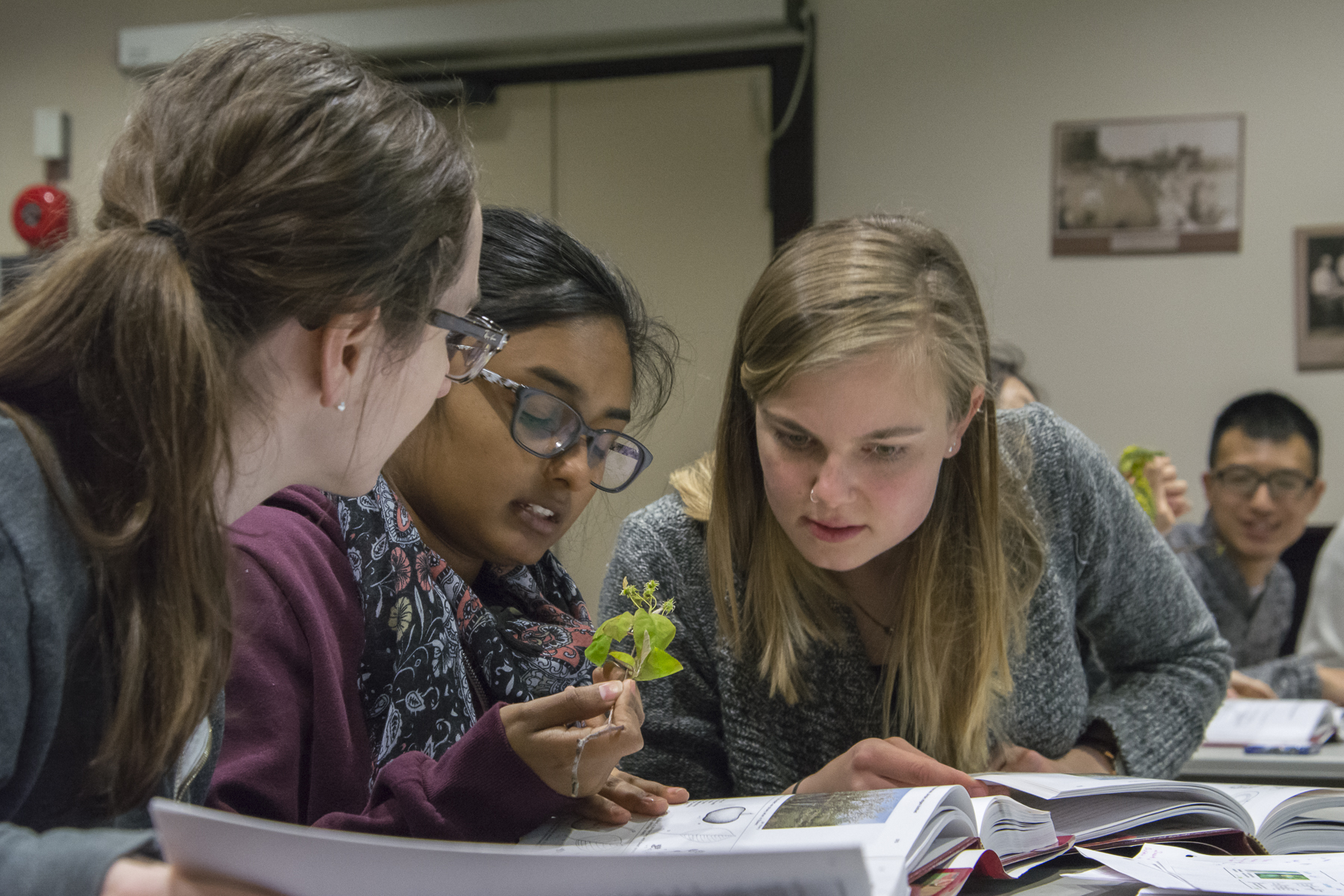 Young women studying leaves
