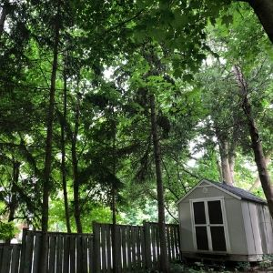 Tall, lush, green trees that make a backyard look like a forest