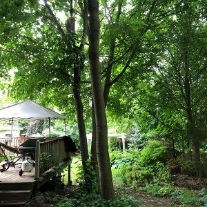 House with a naturalized, lush, green backyard