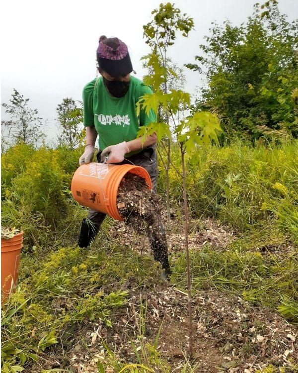 Volunteer mulching native trees