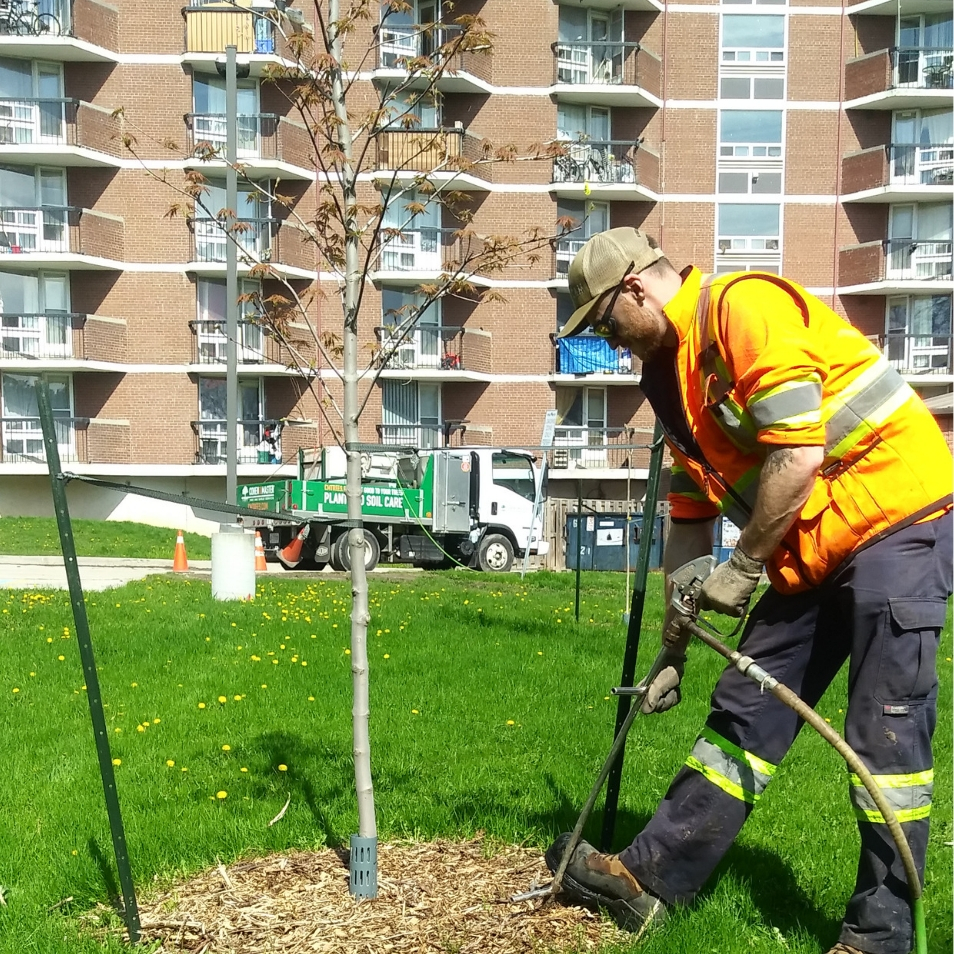 Cohen and Master staff treat newly planted trees with a soil enhancer