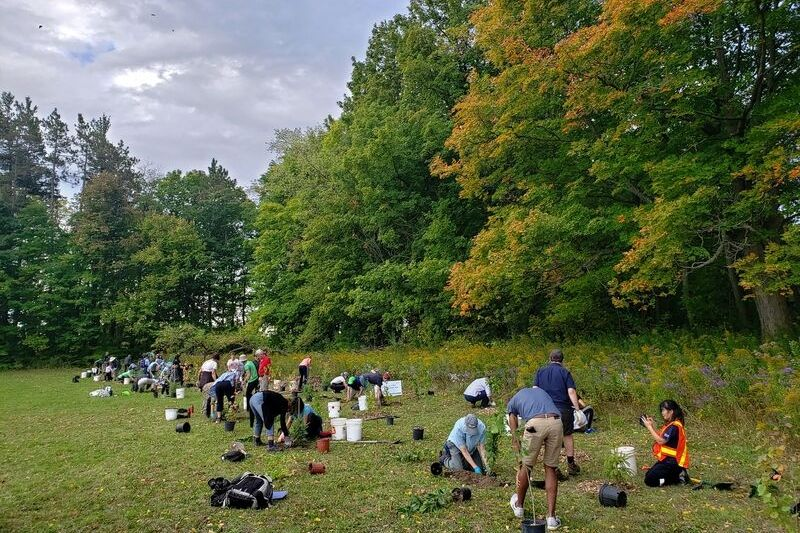 People planting trees on the side of a field