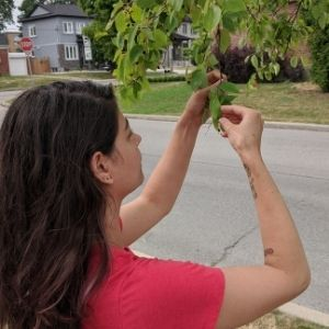 Woman bringing leaves close for observation